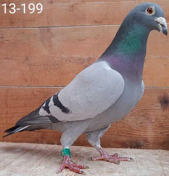 NL13-1835199
