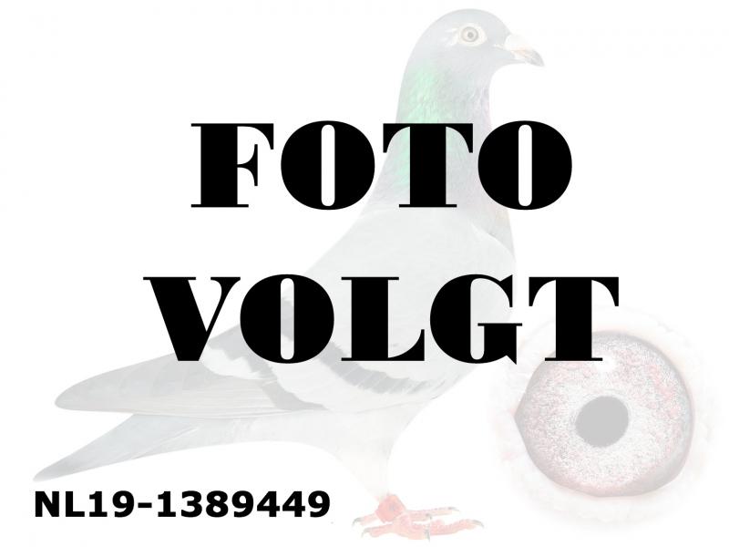 NL19-1389449_foto_volgt