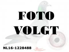 NL16-1228488_foto_volgt