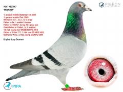 NL07-1527067