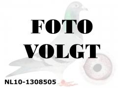NL10-1308505_foto_volgt