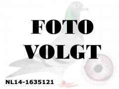 NL14-1635121_foto_volgt