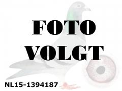 NL15-1394187_foto_volgt